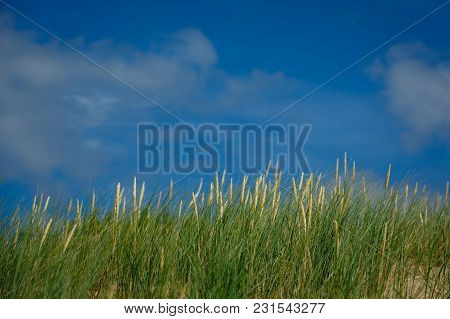 High Green Grass On Sky Background.  Summer Season. Copy Space.