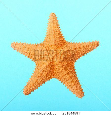 The Caribbean starfish ( Oreaster reticulatus ). Sea life isolated on blue background.