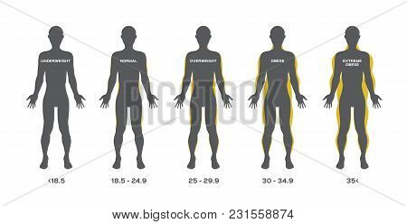 Human Fat From Under Weight To Obese Vector