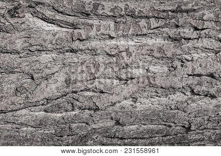 Wood Texture Of Brown Grey Tree Bark