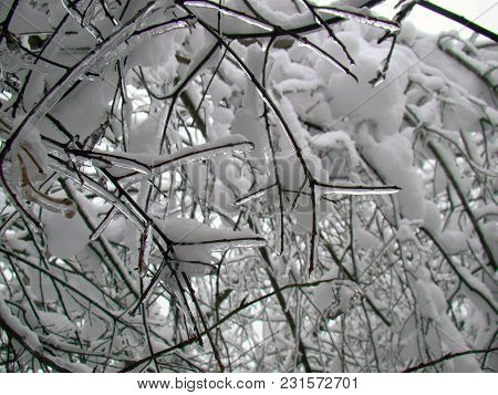 Macro Of Frozen Braches In Winter After The Heavy Snowfall