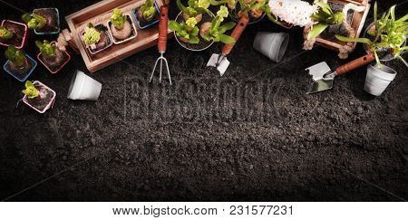 Gardening Tools and Plants on Soil Background. Spring Garden Works Concept