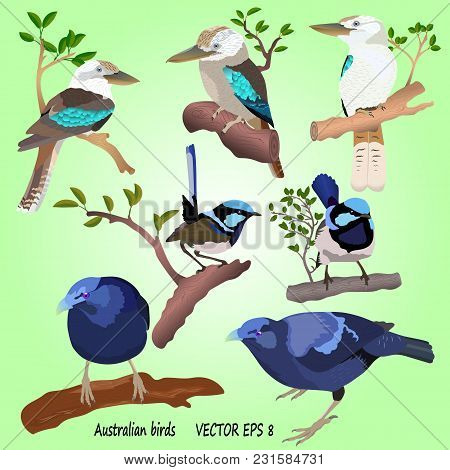 A Set Of Realistic Australian Birds On A Green Background, Isolated. Kookabara, Satin Bowerbird And