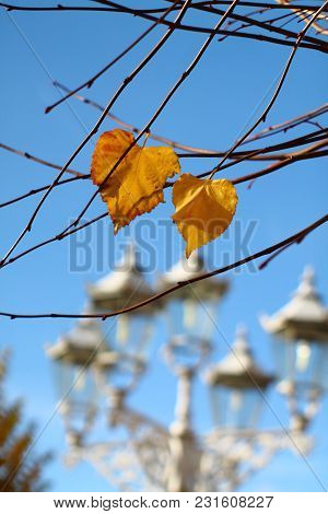 Fragile Twigs With Late Yellow Leaves. Shallow Focus Retro Street Lights Background And Blue Sky. Au