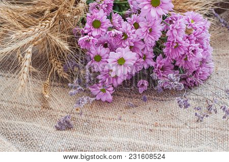 Pink Chrysanthemums With Dry Yellow Ears Of Wheat On A Background With Burlap