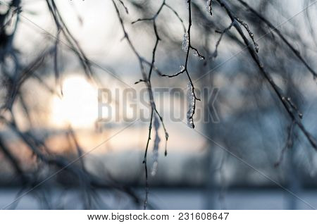 The Icy Branches Of A Tree Against The Setting Sun