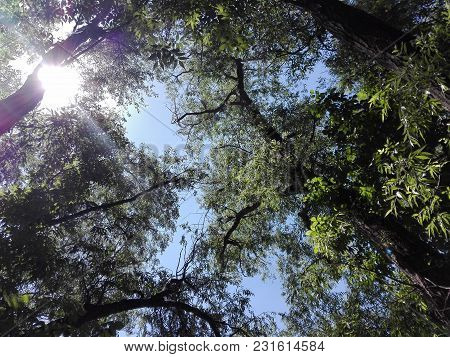 In The Bosom Of The Forest. Fair Sky