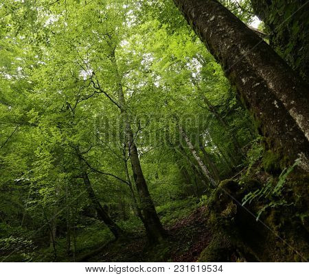 natural green forest.