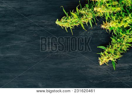 Large Buds Of Fresh Cannabis On A Black Background Of A Wooden Table With A Place For Copyspace