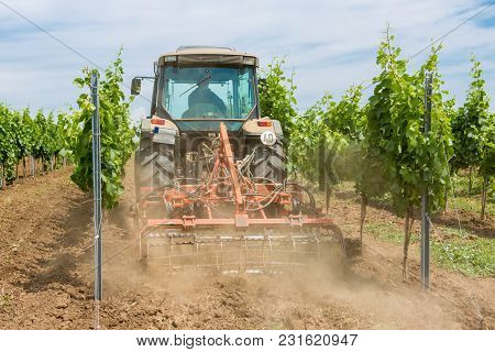 Work On The Vineyard Tractor, Vineyard Cultivation Process
