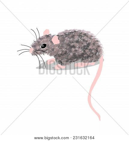 Mouse Grey Isolated On White Background Vector Illustration