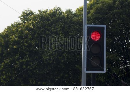 Traffic Light Red Color For Stop With Tree For Background.