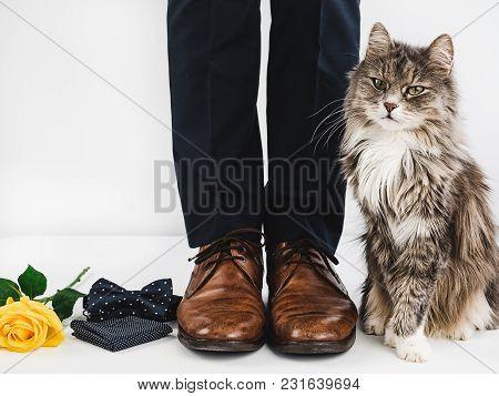 Cute Kitten And Man's Legs