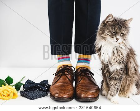 Cute Kitten, Yellow Rose, Bow Tie, Male Legs In Bright, Striped Socks And Stylish Brown Shoes On A W