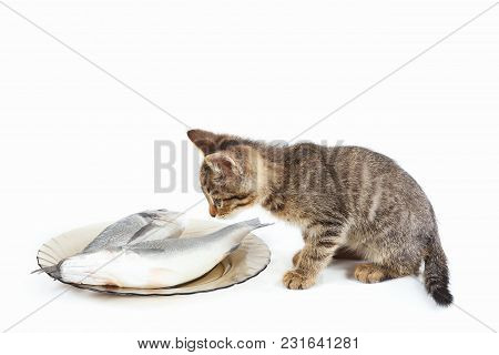 Little Kitten Sniffs At Fish In A Plate On A White Background