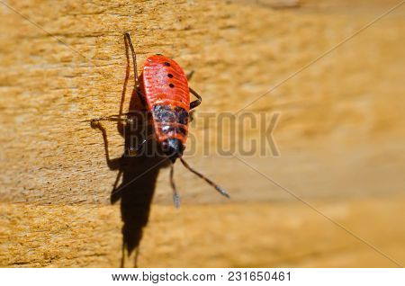 A Beetle On A Wooden Background Macro