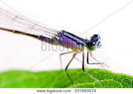 A Dragonfly Sitting On A Leaf Closeup