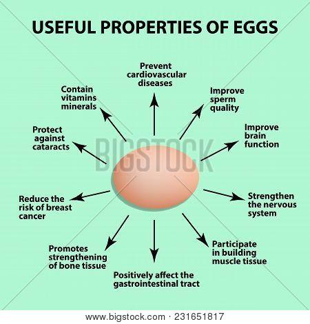 Useful Properties Of Chicken Eggs. Infographics. Vector Illustration
