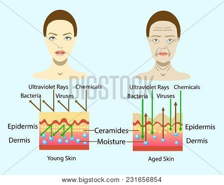 Effect Of Environment On The Skin, Two Types Of Face, Vector Illustration And Diagram For Cosmetolog