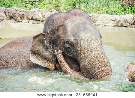 Elephant Taking A Refreshing Dip In The Water. Animal Theme. Funny Photo. Beauty In Nature. Retro Ph