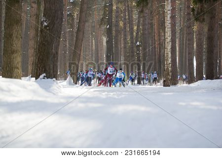 Kazan, Russia - March, 2018: Athletes Skiers Running A Marathon In The Winter Woods, Winter Sports A
