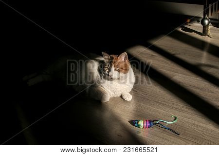 Female Cat Lying In Sunlight Shadow On House Wooden Floor With Mouse Toy Closeup