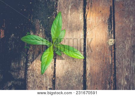 New Life And Idea Concept : Green Sprout Tree Growing Through From Old Timber In Vintage Style. (sel