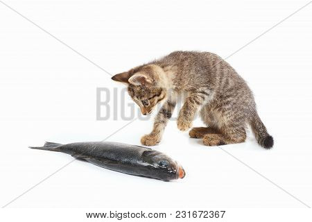 Cute Kitten Looks At A Labrax Fish On A White Background