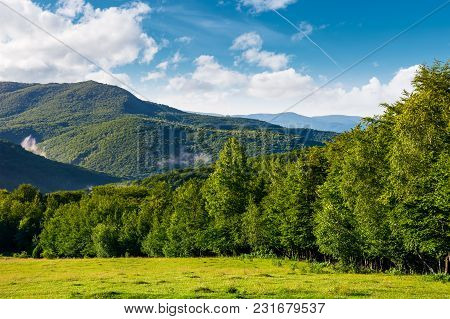 Meadow On A Forested Hillside In The Morning. Beautiful Landscape Of Carpathian Mountains