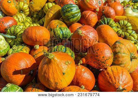 Differents Halloween Pumpkins Exposed For Sale In Germany.