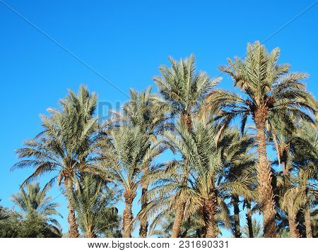 Scenic Landscapes Of Green Palm Trees In Oasis In Central Morocco In Old Village Of Oulad Near Zagor