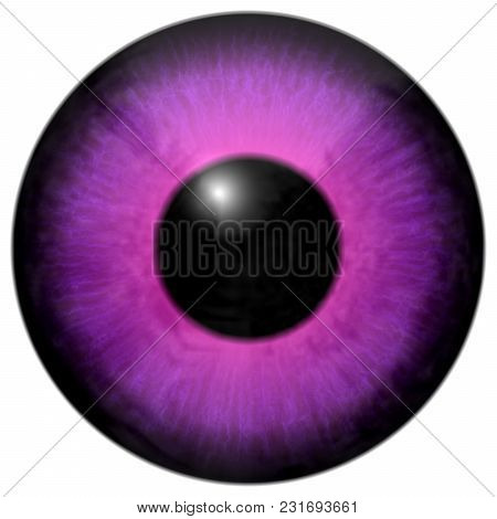 Detail Of Eye With Pink, Purple Colored Iris, White Veins And Black Pupil