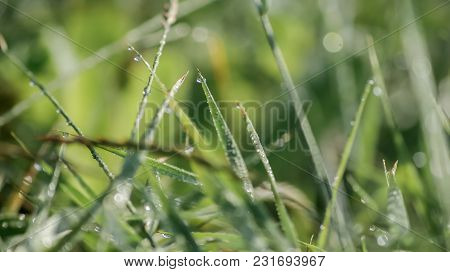 Close-up Of Fresh Green Grass With Dew Drops