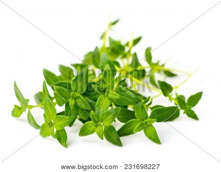 Fresh Herb, Fresh Thyme Isolated On White Background