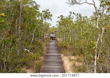 Deep Jungle Slutted Board Walkway Inside Tree Forest In Bako National Park, Malaysia, Borneo