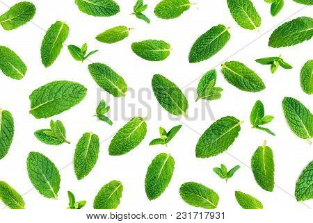 Fresh Mint Isolated On White. Set Of Peppermint. Mint Pattern