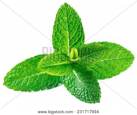 Fresh Raw Mint Leaves Isolated On White Background. Spearmint, Peppermint Close Up