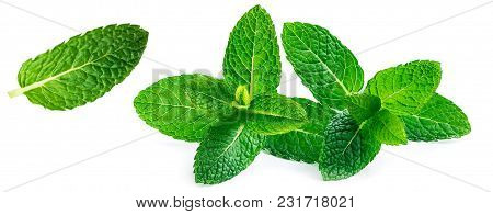 Fresh Mint Leaves Set Isolated On White Background. Spearmint, Peppermint Collection Close Up