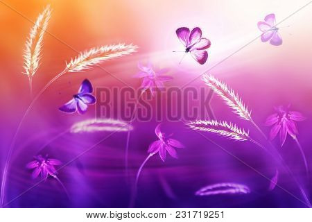 Pink And Purple  Butterflies Against A Background Of Wild Flowers In Purple And Yellow Tones. Fantas