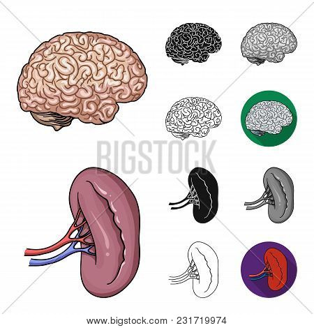 Human Organs Cartoon, Black, Flat, Monochrome, Outline Icons In Set Collection For Design. Anatomy A