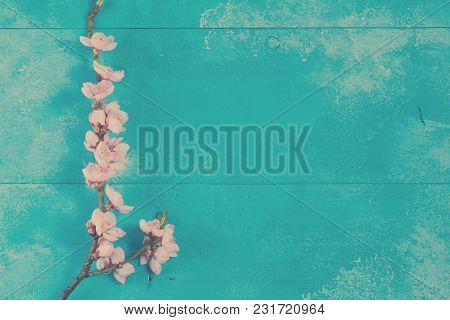 Fresh Pink Cherry Blossom Twigs On Blue Wooden Background, Retro Toned