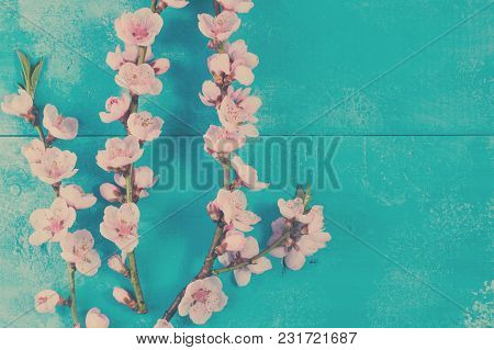 Fresh Pink Cherry Blossom Twigs With Flowers On Blue Wooden Background, Retro Toned