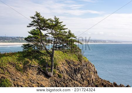A Tree Growing On A Rocky Hillside At The Oreogn Coast