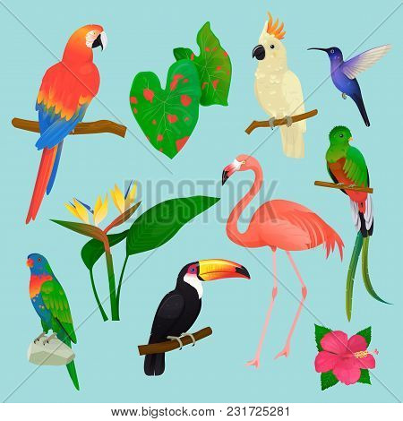 Tropical Birds Vector Flamingo And Exotic Parrot Or Hummingbird With Palm Leaves Illustration Set Of