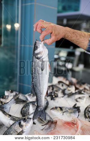 The Seller Holds In His Hand Fresh European Seabass Or Dicentrarchus Labrax, Lav In The Greek Fish S