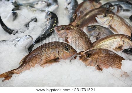 Porgy Or Pagrus Pagrus, Seabream Fishes On Ice For Sale In The Greek Fish Shop. Porgy Or Pagrus Pagr