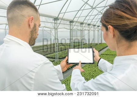 White Screen Tablet Greenhouse. Agricultural Engineers Using Tablet Greenhouse. Seedlings Growing,