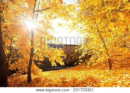 Autumn Scenery. Beautiful Gold Fall In Park.