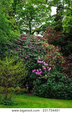 English Public Garden At Late Spring With Blooming Rhododendrons
