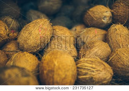 Coconuts Close Up. Harvest Of Coconuts. Brown Coconuts